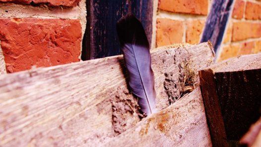 Titelbild für Birdz Folge 1